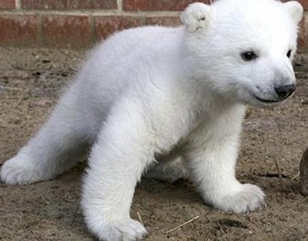 나는 개가 아니라 곰이다멍~