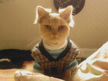 시어머니 같은 이미지의 고양이 사진