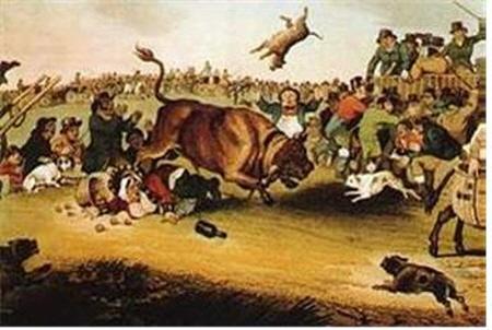 남자들의 견종을 소개한다 (2): 소 잡는 백정 불독