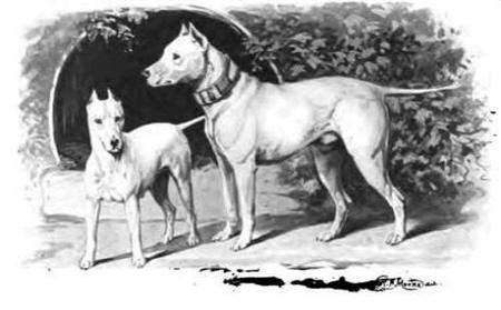 과거의 불테리어는 '백의 기사'라는 별명에 걸맞게 수려한 외모를 가지고 있었다