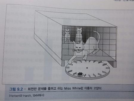 숙달된 조교의 시범을 보는 고양이들