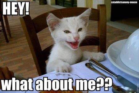 하박국 님의 고양이가 굶고 있습니다.