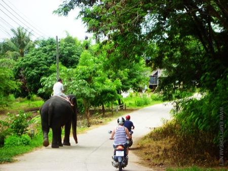 태국의 코끼리