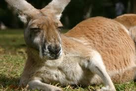 """""""내가 생각해봐도 호주가 괜찮긴 해..."""""""