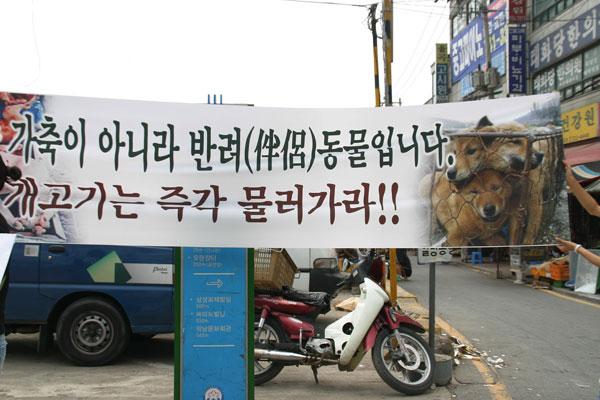 [말복특집] 개고기 폐지론자들은 동물 복지를 악화시키고 있다