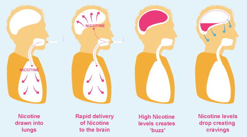 how does smoking affect your body essay Smoking and its effects some of these chemicals affect the nowadays everyone knows that smoking is bad for health so look after your body and if.
