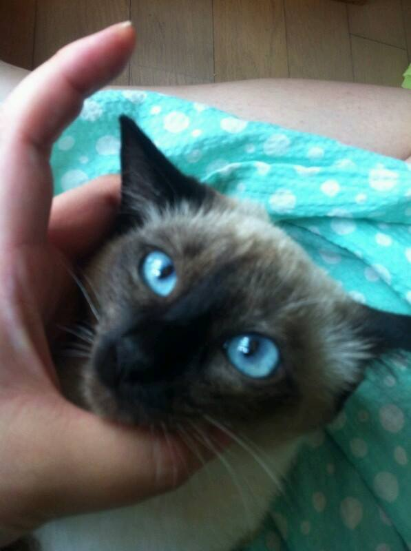 아이의 침대를 차지하다 처벌을 받고 있는 고양이.