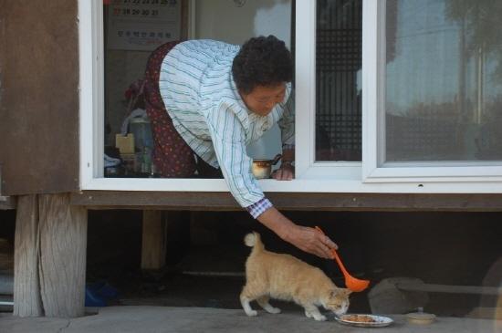 ▲ 혼자 사는 정씨를 찾아오는 길고양이. 길고양이에게 김치 섞은 밥을 주고 있다. ⓒ 장경혜