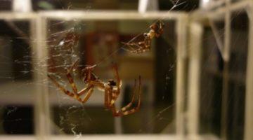 거미의 사생활: 저 여자는 몇 명의 남자와 사귀었을까?