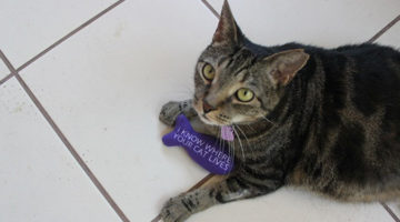 인터넷이 당신의 고양이 사진으로부터 알 수 있는 것