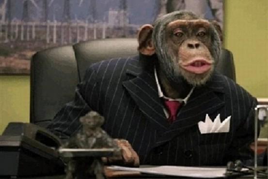원숭이는 우리 생각보다 훨씬 똑똑한 주식 투자자다