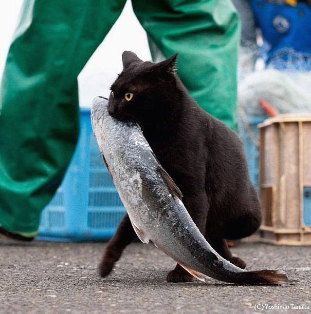 cat-thief-11