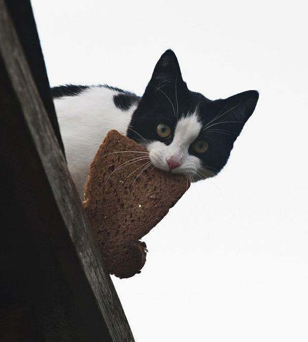 cat-thief-14