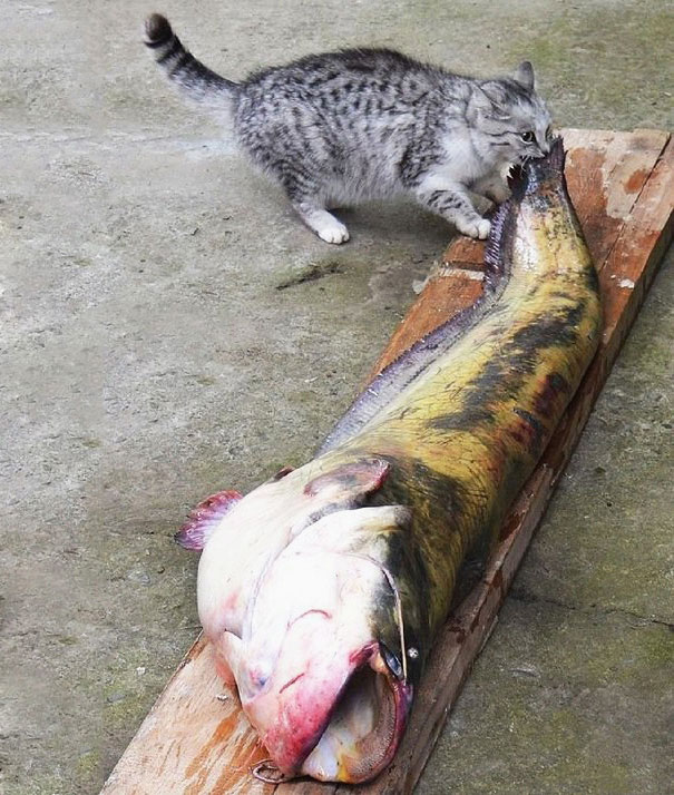 cat-thief-15