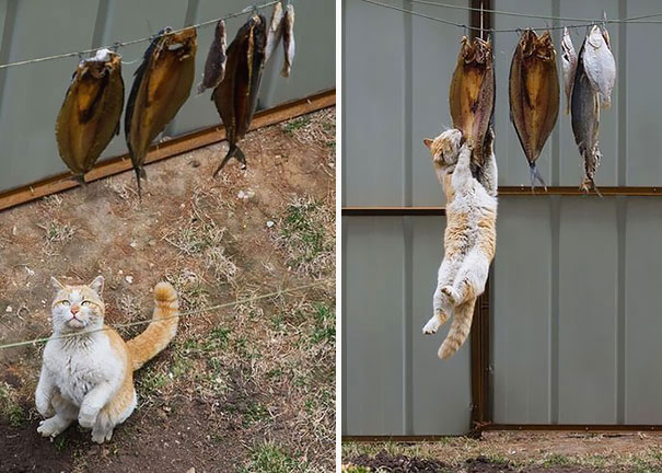 cat-thief-2