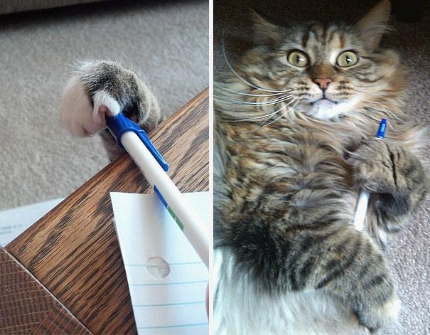 cat-thief-4
