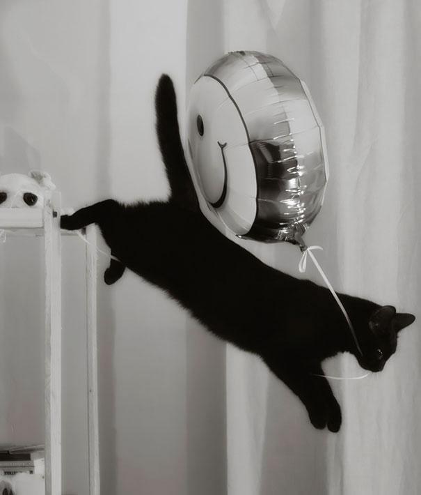 cat-thief-5