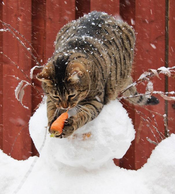 cat-thief-8