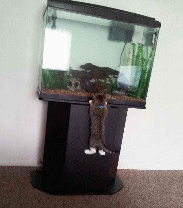 cat-thief-9