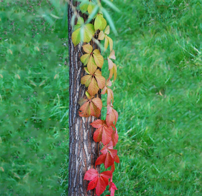 rainbow-color-change-nature-124__700