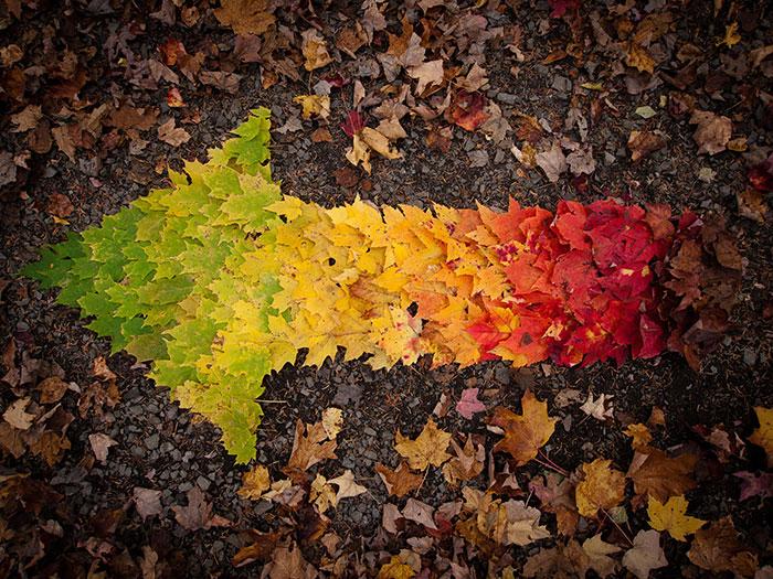 가을의 색을 스펙트럼으로 보여주는 12장의 사진