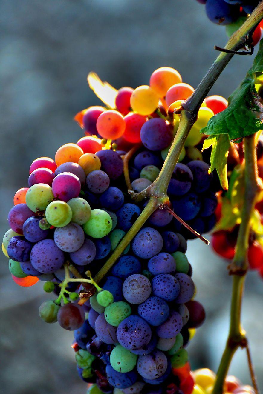 rainbow-color-change-nature-2__880