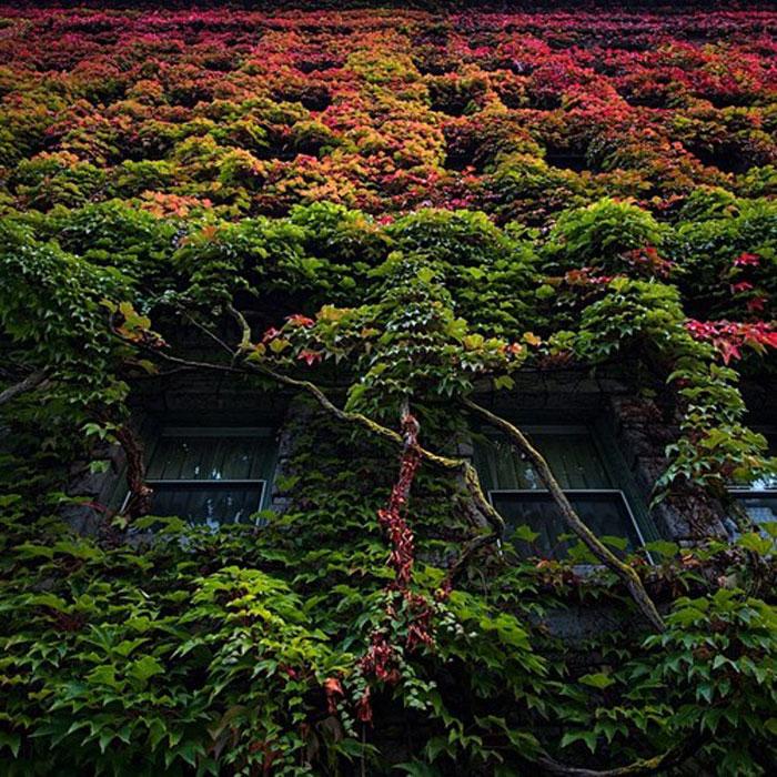 sylvia-hotel-autumn-transition__700
