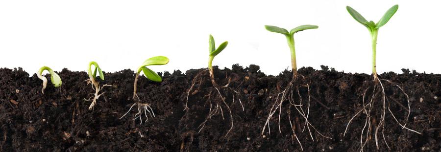 SeedlingSproutBaseBorder