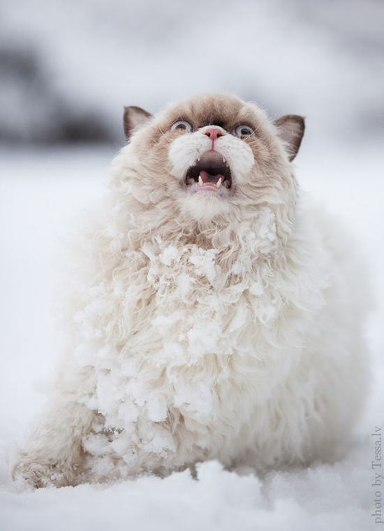 cat_first_time_on_snow-1