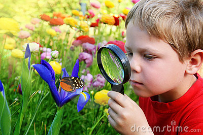 child-observing-butterfly-8906266