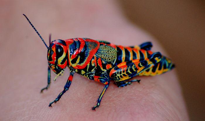colorful-rainbow-animals-151__700