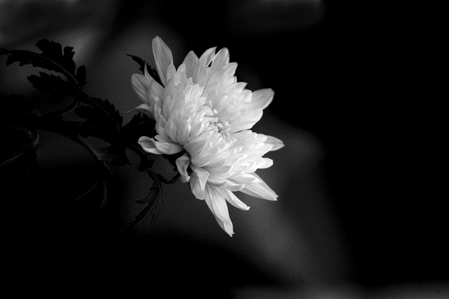 flowerforthedeceased