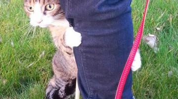 처음으로 집 밖을 나간 고양이의 반응 21선