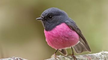 세상에서 가장 아름다운 색을 가진 동물 15선