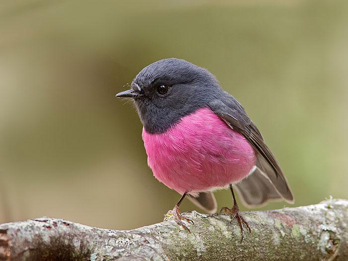 unusual-colored-animals-141__700