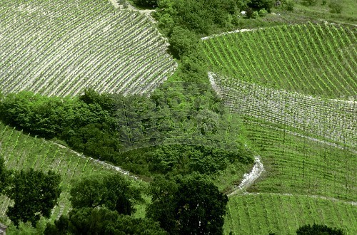 Aerial_Shot_of_Rice_Fields_in_Italy-644153
