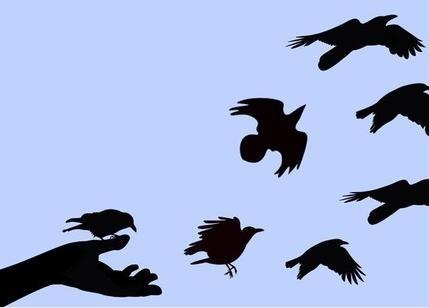 birds-leaving-nest