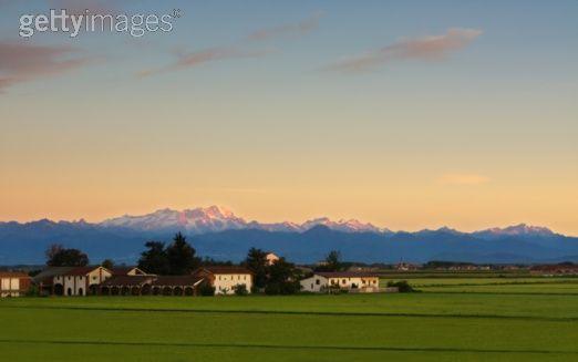 piedmont-rice-field