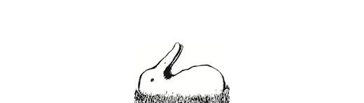 오리? 아니면 토끼?