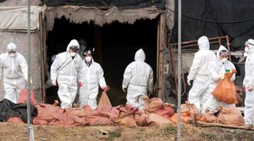 살처분은 가축 전염병의 진정한 해결책이 아니다