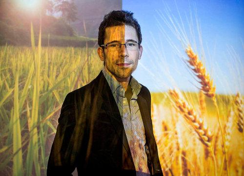 Thomas Talhelm 교수에 따르면, 밀과 벼의 재배 시간의 차이는 사회 구성원과의 협력에도 많은 영향을 끼쳤다.