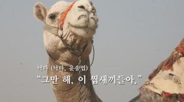메르스 – 낙타 개드립 모음