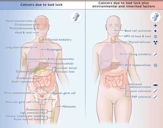 암이 생기는 원인은 환경, 유전, 그리고 무작위적인 돌연변이가 있다. Credit: Elizabeth Cook