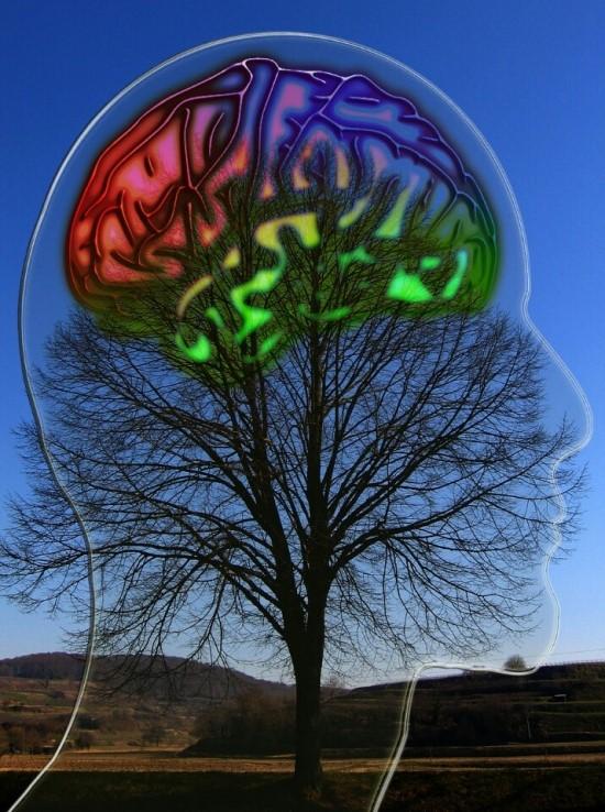 ▲뇌의 무게는 1.4kg에 불과하지만 우주에서 제일 복잡한 시스템이다.