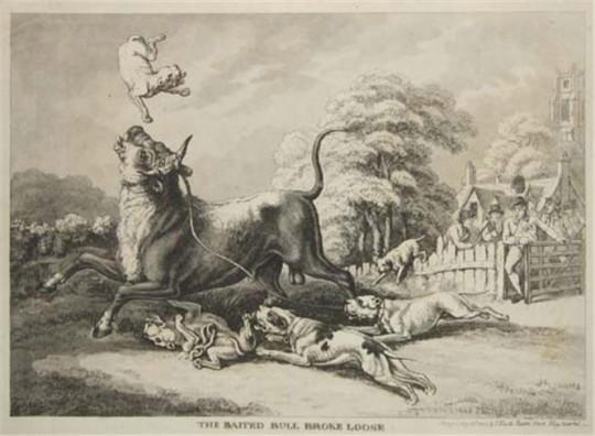 개와 소의 수난시대