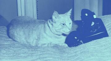 당신의 고양이가 당신에게 말을 걸고자 합니다