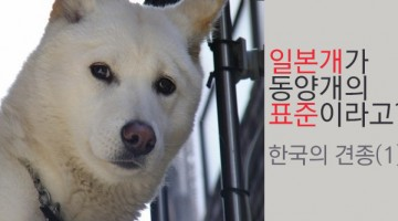 한국의 견종들 1