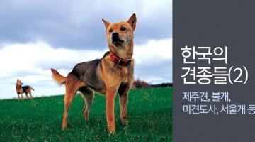 한국의 견종들 2