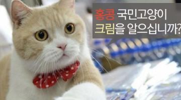 홍콩의 국민고양이 실종사건