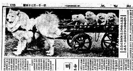 옛날 신문에 실린 삽살개의 모습